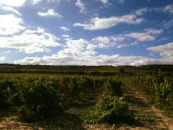 Vineyards Bodegas de La Real Divisa