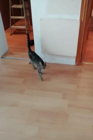 Cat wooden floor lockdown manilva